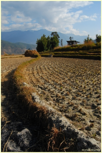 Valley rice fields