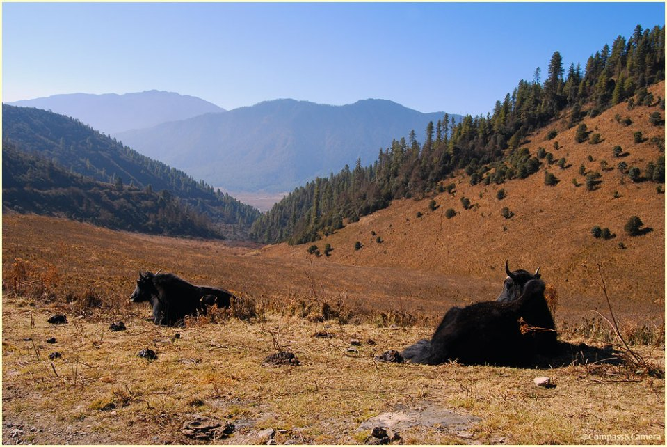 The Phobjikha Valley