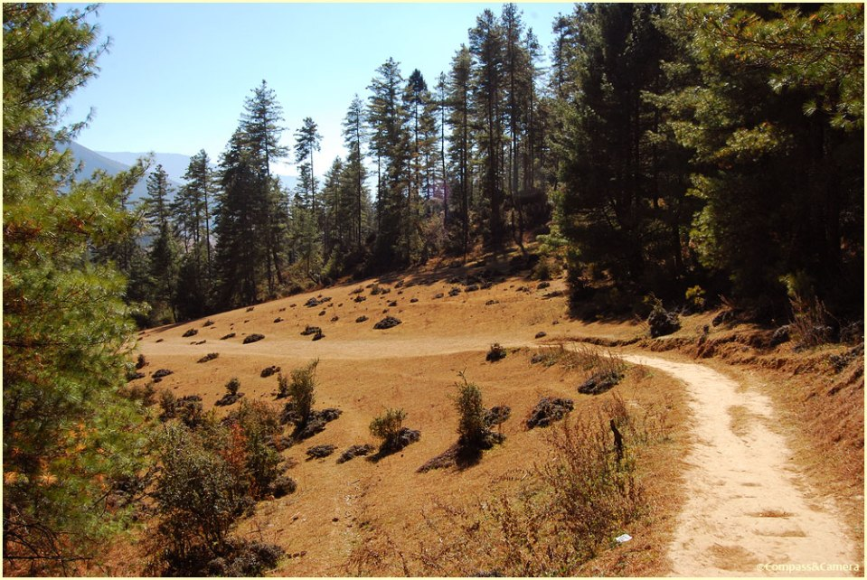 Gangtey Nature Trail