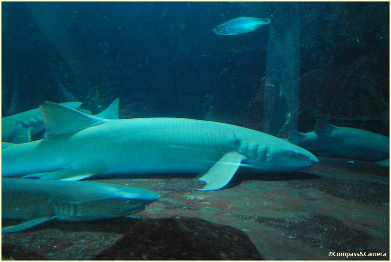 Shark sleeping time
