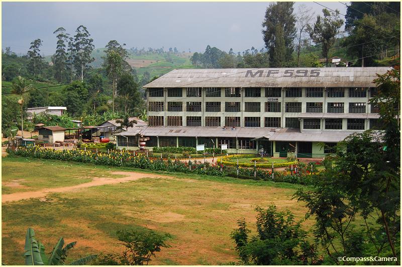 Dickoya Tea Plantation