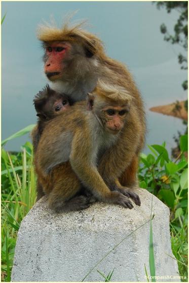 Roadside monkey business