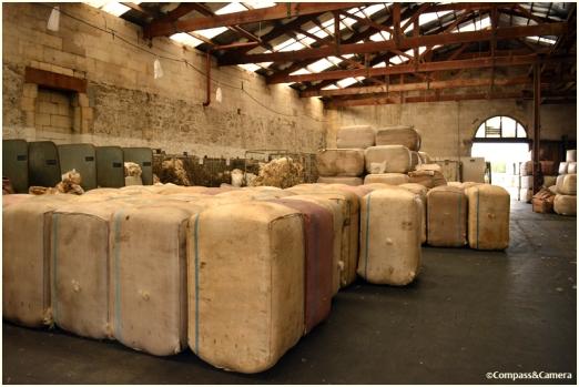Sheep wool exporting