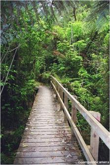 Trail crossing