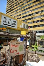 """Edible """"Garden City"""" Project"""