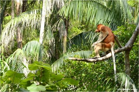 Monkeying around
