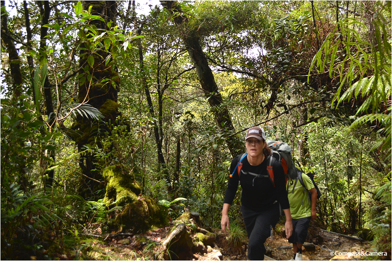 The agony of defeat, on the trail to Kinabalu