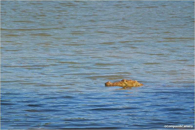 Croc from Sri Lanka