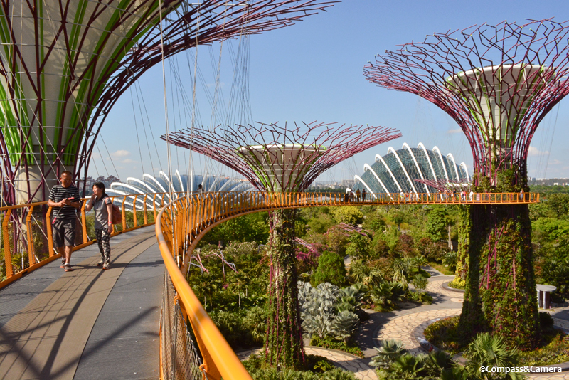 Supertrees and Skyway at Gardens by the Bay, Singapore