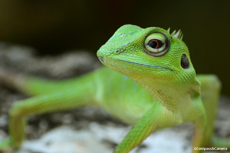lizard02
