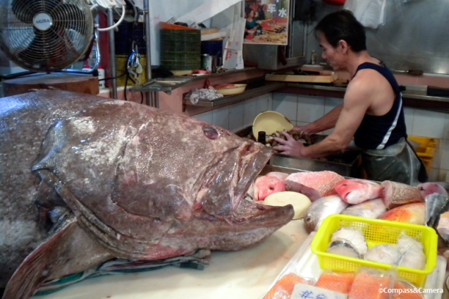 Goliath Grouper at Chinatown wet market