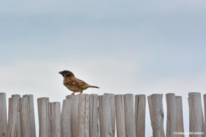 Bungalow birding