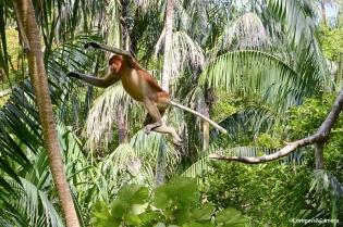 Bako, Borneo