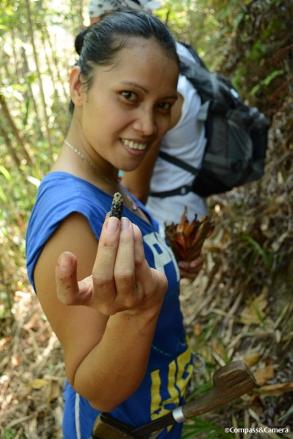 Saloma, Queen of the Jungle :: Borneo