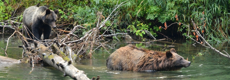 A Grizzly Weekend in Bella Coola