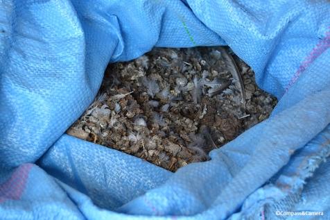 Bags of pigeon poo