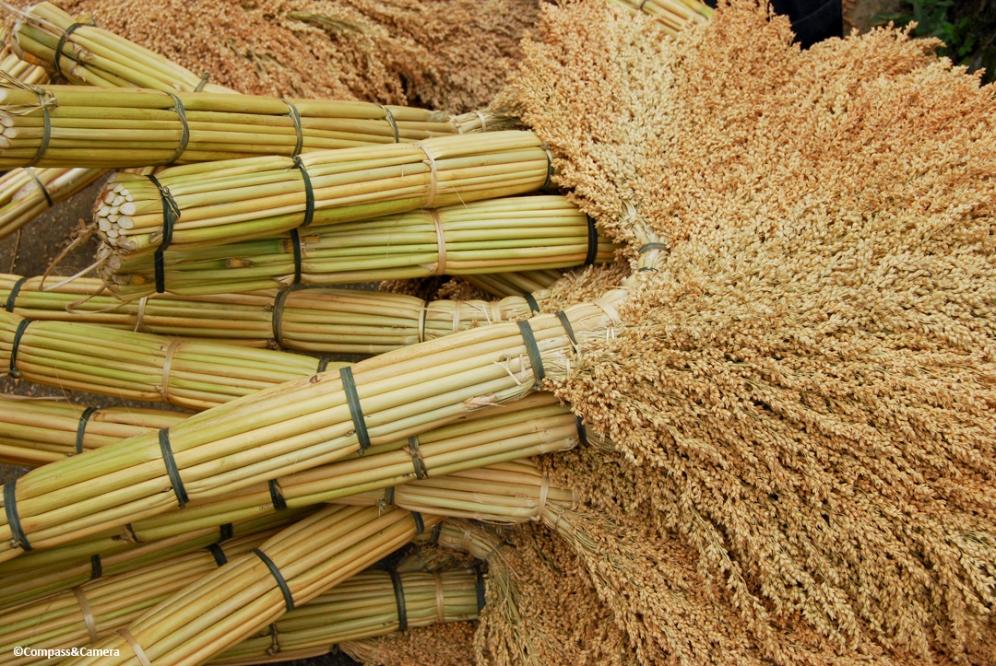 Handmade Brooms :: Sapa, Vietnam