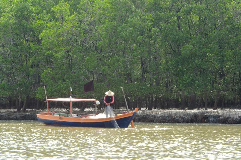 Bako : Borneo
