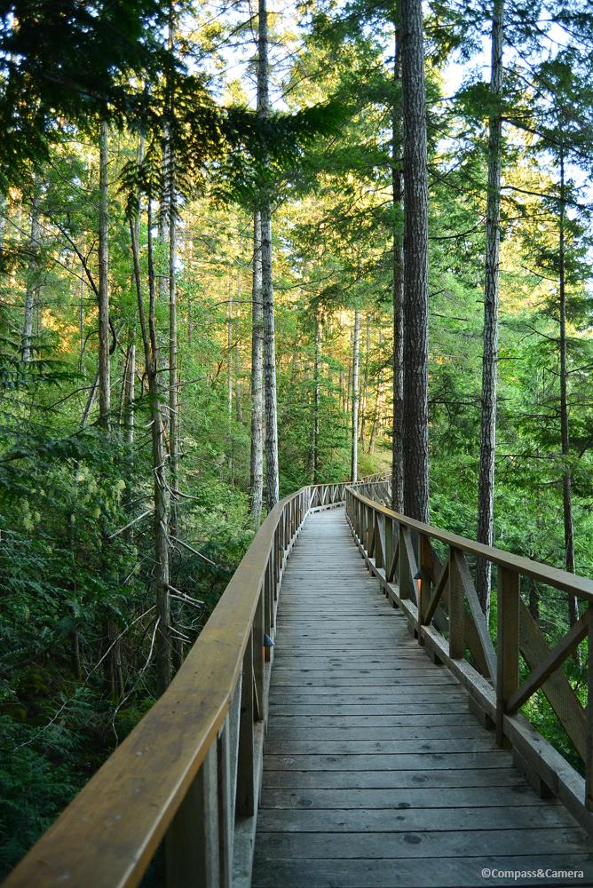 Trail through the trees