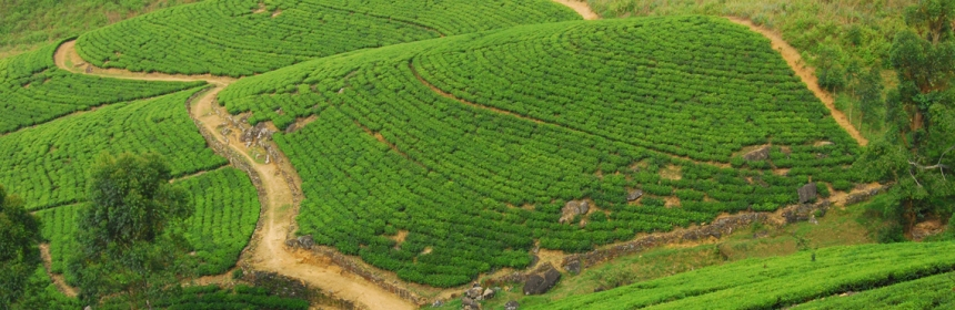 Tea Country near Hatton
