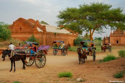 Horse carts at the pagoda
