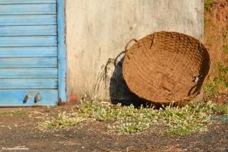 Basket full of sunshine