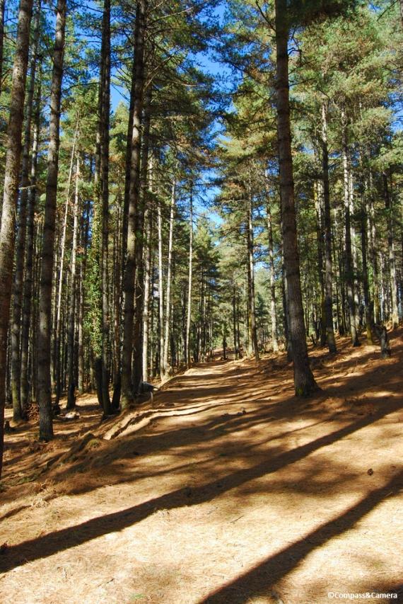 Gangtey Nature Trail, Bhutan