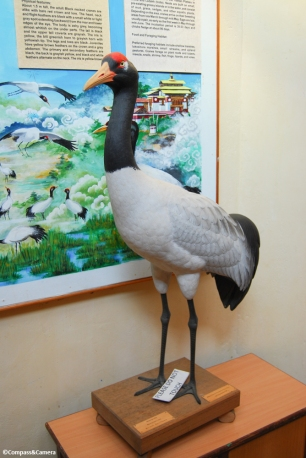 Model of a black-necked crane