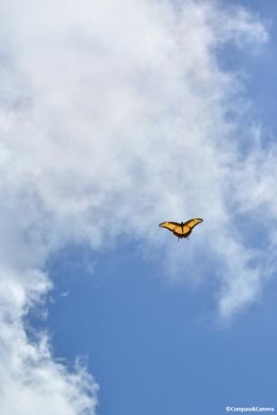 Butterfly in Guantanamo