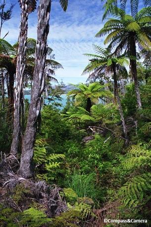 Lush vegetation of the Abel Tasman Coast Trail