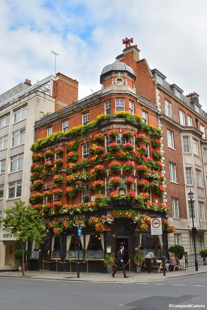 Summer Blooms in Marylebone
