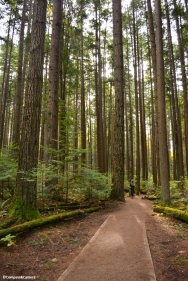 Pacific Spirit Regional Park, Vancouver