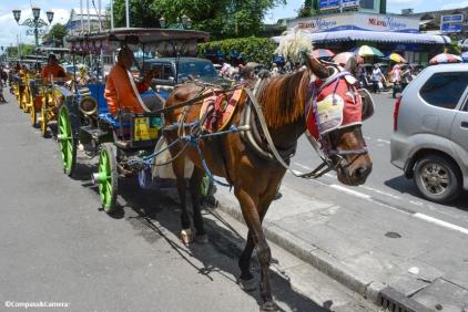 Yogyakarta horse cart